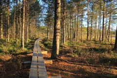 Pathway in the bogs Stock Photos