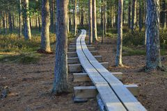Pathway in the bogs Royalty Free Stock Photo