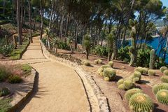 Pathway in a botanical garden. View on the beautiful cactus gardens of Palafrugell Botanical Garden with the blue Mediterranean sea behind some tress Royalty Free Stock Images