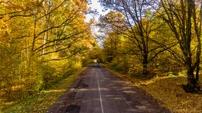 Pathway in the bright autumn forest. Aerial view stock photography