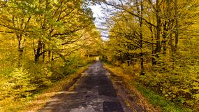 Pathway in the bright autumn forest. Aerial view stock images