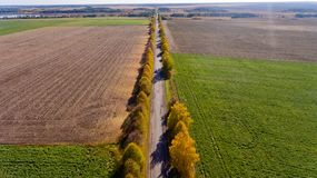 Pathway in the bright autumn. Aerial view Stock Photography