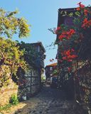 Pathway in Between Buildings With Flowers and Plants Stock Photo