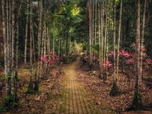 A pathway in Bukit Wang Recreational Forest in Jitra, Kedah, Malaysia. Stock Images