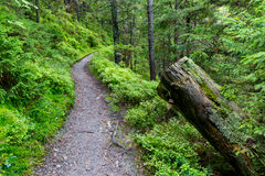 Pathway in carpathian green forest Royalty Free Stock Photos