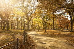 Pathway Through Central Park Stock Images