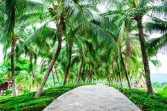 Pathway in Chiang Mai Royal Garden. Treelined walkway in Royal Garden Stock Photos