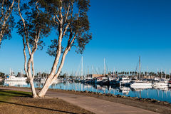 Pathway Through Chula Vista Bayfront Park and Marina. Pathway through the Chula Vista Bayfront park with boats moored in the marina Stock Photography