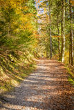 Pathway. Close to the river in beautiful forest in autumn Royalty Free Stock Photos