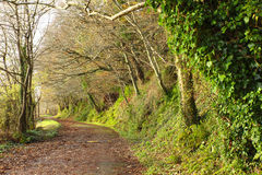 Pathway. Co.Cork, Ireland. Park road with trees. Royalty Free Stock Photos
