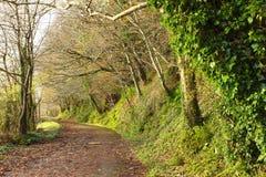 pathway Co Cortiça, Ireland Estrada do parque com árvores fotos de stock royalty free