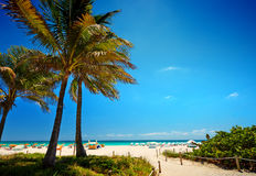Pathway with coconut palm to the  beach   in Miami Beach, USA. Royalty Free Stock Image