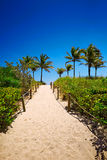 Pathway with coconut palm to the beach in Miami Beach, USA. Stock Photography