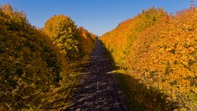 Pathway between colorful autumn trees. Aerial view royalty free stock images