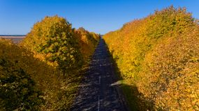 Pathway between colorful autumn trees. Aerial view. Pathway between colorful autumn trees stock photos