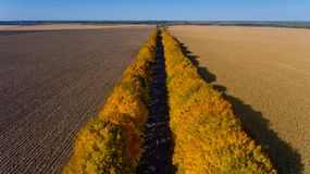 Pathway between colorful autumn trees. Aerial view royalty free stock photography