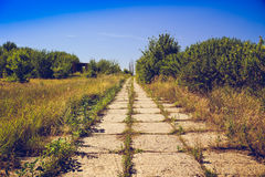 Pathway of concrete tiles, overgrown with grass. Post apocalypse concept. Toned Royalty Free Stock Photography