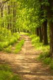 Pathway in countryside. Surrounded by woodland Royalty Free Stock Photos