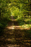 A pathway covered by leaves in a dense forest with filtered rays Royalty Free Stock Images