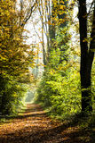 A pathway covered by leaves in a dense forest I. N Autumn colours on a misty morning Stock Photos