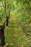 Pathway covered with mos. Pathway in forest covered with mos,Thailand Royalty Free Stock Photos