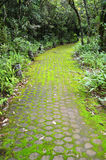Pathway covered with moss Royalty Free Stock Photo