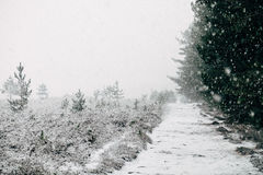 Pathway Covered With Snow Near Green Trees Stock Photography
