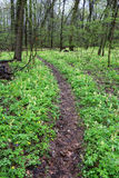 Pathway in deep forest Royalty Free Stock Photography