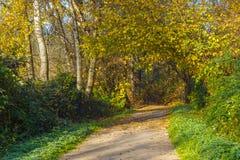 Pathway through the dense woodland park at Burnaby Lake Royalty Free Stock Photo