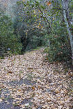 Pathway with dry leaves in winter forest Royalty Free Stock Photo