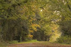 A pathway in early Autumn, Southampton Common stock photography