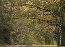 A pathway in early Autumn, Southampton Common stock images