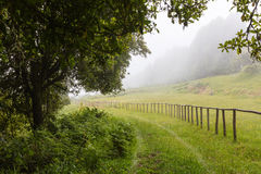 Pathway entering in a misty green forest Royalty Free Stock Photography