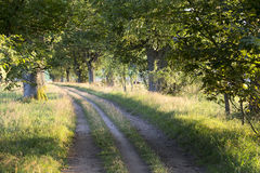 Pathway in the evening sun. Rural pathway among the trees Stock Photos
