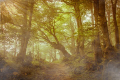 Pathway in a fairytale forest Stock Images