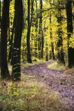 Pathway in the Fall. Golden yellow colored folliage in the fall Stock Photos