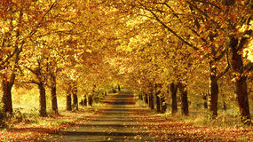 Pathway in the Fall royalty free stock photography