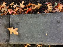 Pathway of fall leaves. A path with autumn/fall leaves Stock Photography