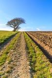 A Pathway through Farmland royalty free stock photos