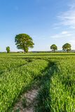 Pathway Through Farmland. A pathway towards trees, through a field of young crops Stock Photos