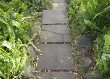 Pathway through the Ferns Stock Images