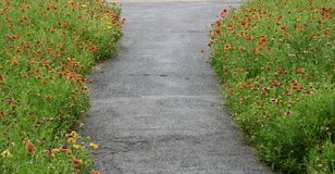 Pathway and flowers Stock Image