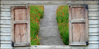 Pathway and flowers Royalty Free Stock Images
