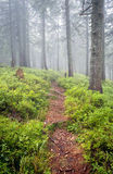 Pathway in fog Royalty Free Stock Photo