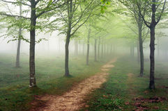 Pathway in foggy forest Royalty Free Stock Photos