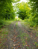 Pathway through forest. Scenic view of track or pathway receding through green forest Royalty Free Stock Image