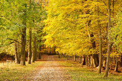 Pathway in the forest. Pathway in the autumn forest Royalty Free Stock Image