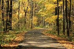 Pathway through the forest. Pathway through the autumn forest Stock Photography