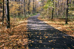 Pathway through the forest. Pathway through the autumn forest Royalty Free Stock Image