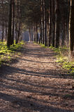 Pathway in forest Stock Image